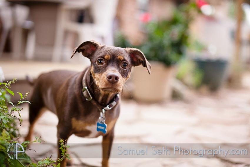 backyard Wedding dog